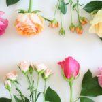 色とりどり バラの花